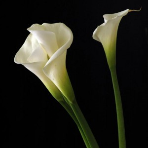 La Calla, source hdwallpaperscool.com