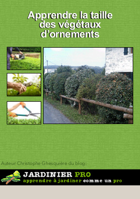 taille-formation