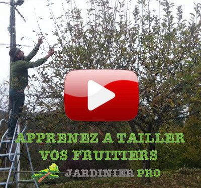 formation taille des fruitiers