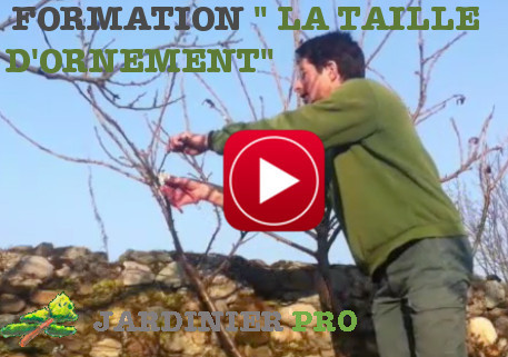formation taille d'ornement